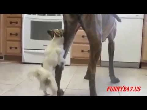 Funny Animal Mating Fail Best Momment Animal Mating Animal Relative To T