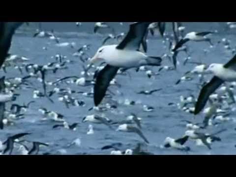 Θάλασσα Πλατειά - Μάνος Χατζιδάκις - YouTube