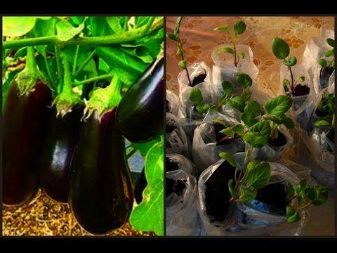 Сад огород– Google+