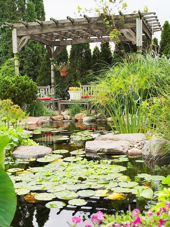 Diy garden look lilly pads make this pond look wildly romantic gardenscapes pinterest for How to water a garden
