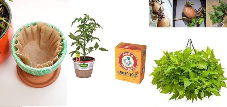 24 astuces de jardinage bon march�!