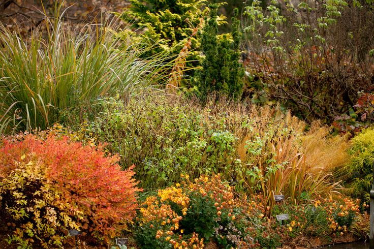 Ornamental Grasses Upstate Ny : Best images about finding great grasses on