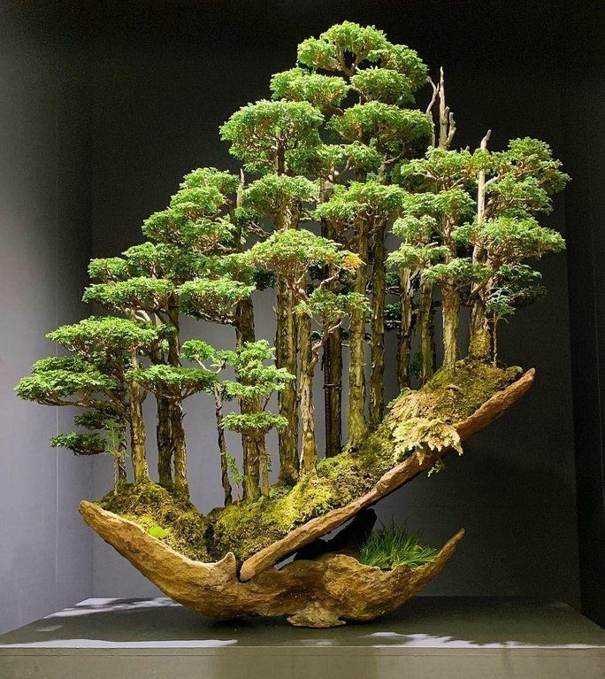 Account Suspended Bonsai Forest Bonsai Bonsai Art