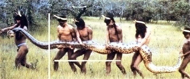 Índios Xavantes capturam cobra Sucuri, rio Araguaia, Barra do Garças, Mato Grosso.