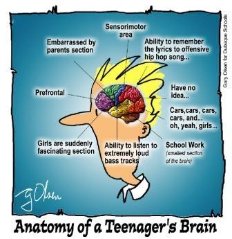 The Teenage Brain: Part 1