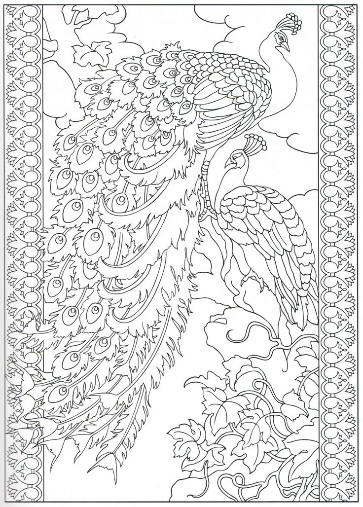 Scribbles Drawing And Coloring Book : Peacock coloring page color pages stencils
