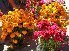 Las flores: Son la bienvenida para el alma. Tienen un significado dependiendo del color.  Flor blanca: Representa el cielo. Flor amarilla: La tierra. Flor morada: El luto. Flor roja: la sangre de Cristo y la resurrección, así como la vida humana y animal. Flor blanca: La pureza. Se utiliza más para las ánimas de los niños Flor de cempasúchil: Es una flor tradicional de muertos, por su color amarillo/anaranjado representa la fuerza de la luz del sol y de la vida.