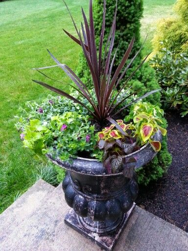 Front door flowers for my urn lowes has filler plants for for Good filler plants for landscaping