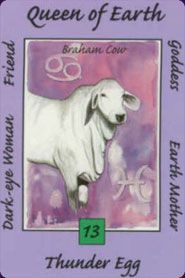 Card Images from the Australian Animal Tarot