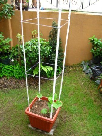15 Best Bamboo Garden Supports And Decor Images On 400 x 300