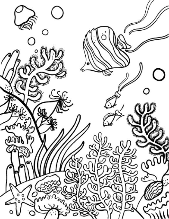Картинки кораллы водоросли морские камни рисунки, подруге днем рождения