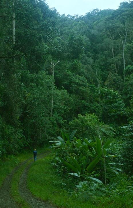 Tropical Rainforest Heritage of Sumatra. Indonesia.