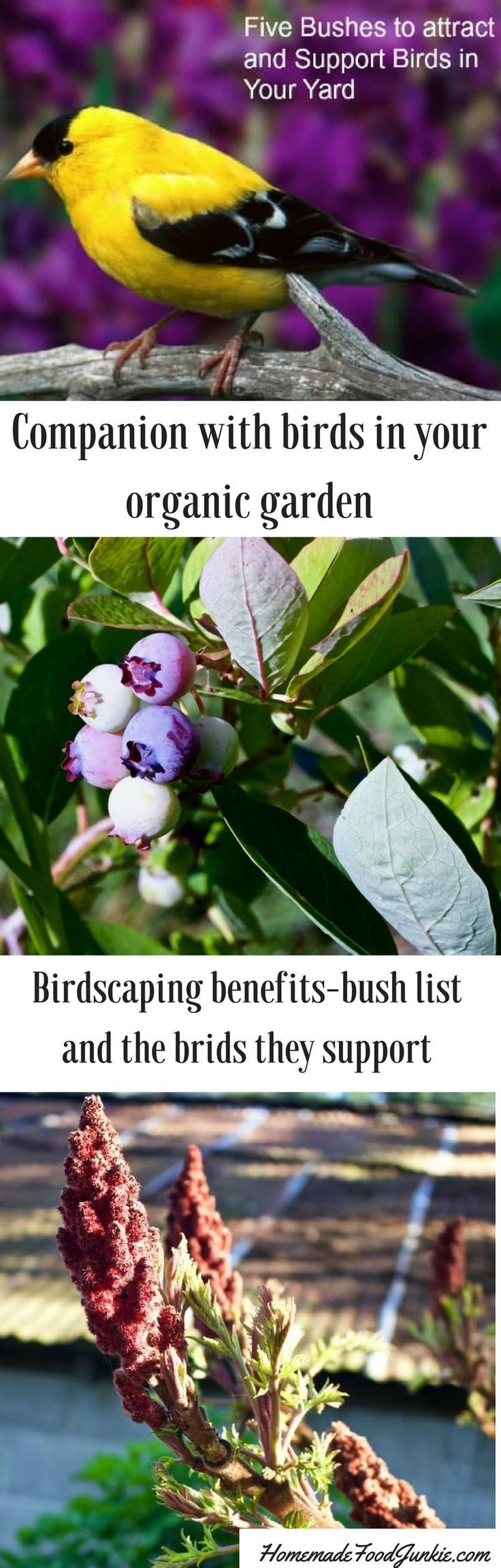 Birdscaping offers benefits to organic gardeners and support our wild birds.