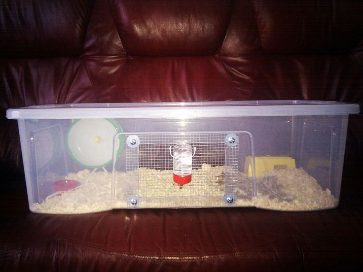 17 best images about more small pets on pinterest guinea for Diy hamster bin cage