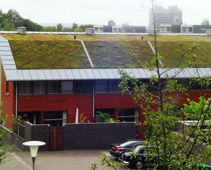 Groene daken: duurzaam en zorgen voor goede isolatie.