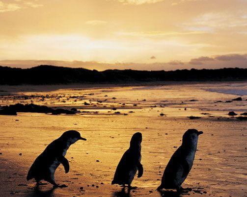 Phillip Island - Victoria, Australia