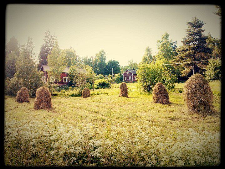 Traditional way to dry the hay in Finland. You seldom find these in the countryside these days.