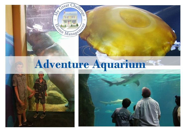 Aquarium Adventure Camden Nj Ditl My Great