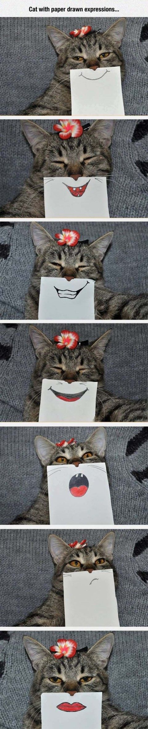 Funny 8 (18 pict)   Funny pictures