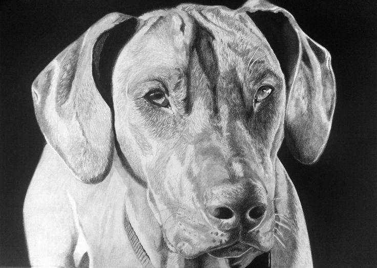 """Dog""Fettkreidestift on Canvas, 500x700mm painting by wilfried ploderer 2015 ©"
