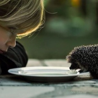 : Hedges, Friends, Pet Hedgehogs, Camera, Blowing Bubbles, Baby Hedgehogs, Photo, Lacto Free, Fairies Tales