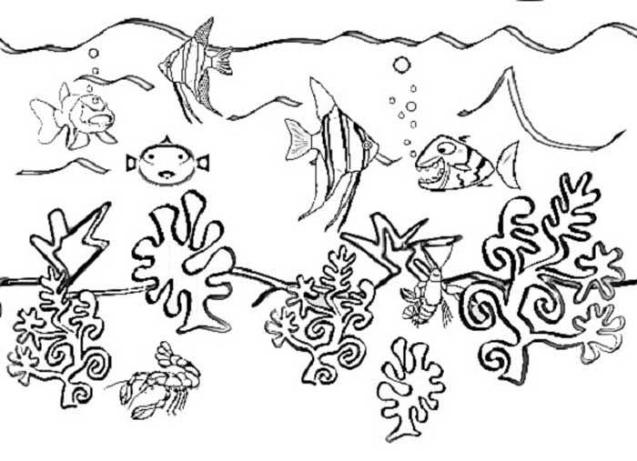 67 best Kindercamp--Under the Sea images on Pinterest