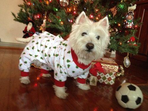Christmas Tree PJ's