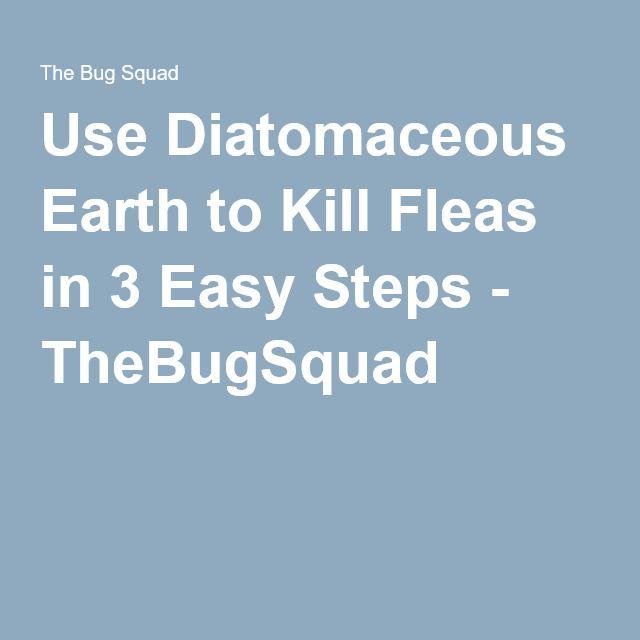 Best 25 Killing Fleas Ideas On Pinterest Flea Treatment