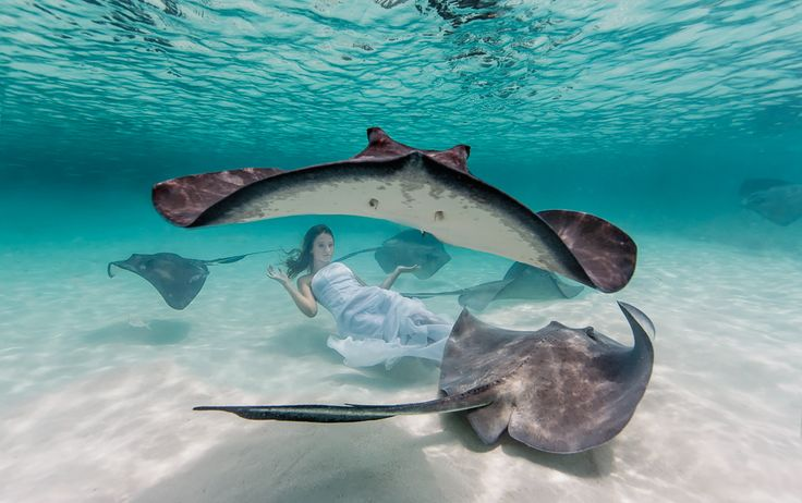 Home - Conceptual and Fashion Underwater Photography