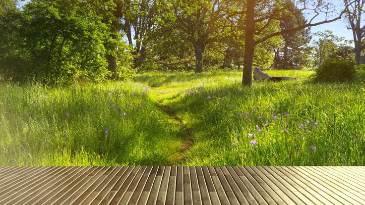 wooden picnic table top  green park grass nature garden background stock footage  top green park