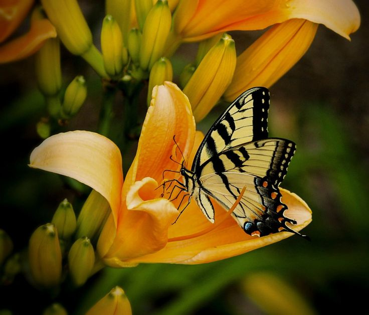Mein… Glück? …Mein Glück?  Mein Glück ist ein spielendes Blatt im Sommerwind, der leichte, flüchtige, zierliche Schatten, mit dem mich, zwitschernd, die Schwalbe streift,  http://www.aus-liebe.net/gedichte-von-liebe-leben-sanft-hinverschmelzendes-largo-von-arno-holz/