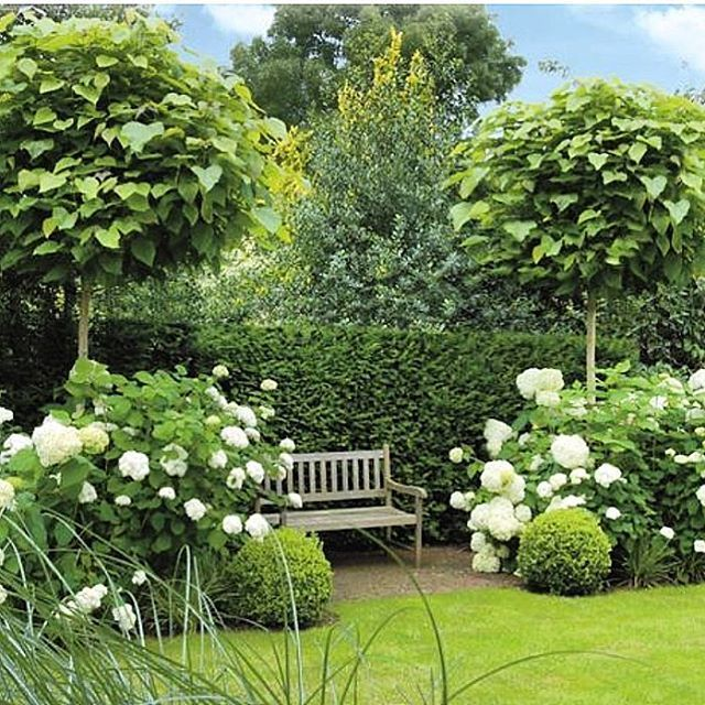 25 best ideas about green hydrangea on pinterest annabelle hydrangea hydrangea bush and. Black Bedroom Furniture Sets. Home Design Ideas