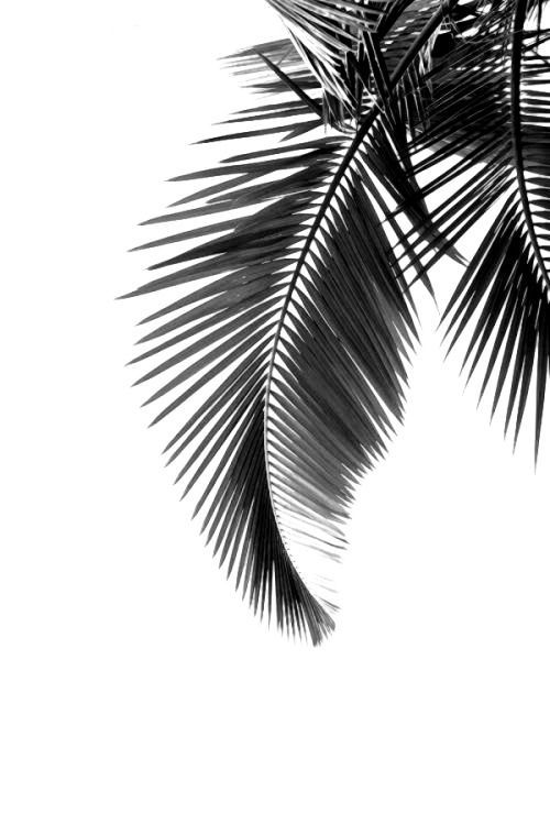 Botanial poster featuring palm leaves.