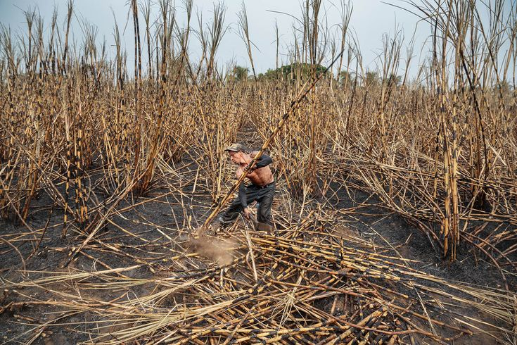 A cane cutter, covered in soot and ashes of charred sugar cane, works in a field that was burned the night before, in Chichigalpa, Nicaragua on May 1, 2014- © Ed Kashi