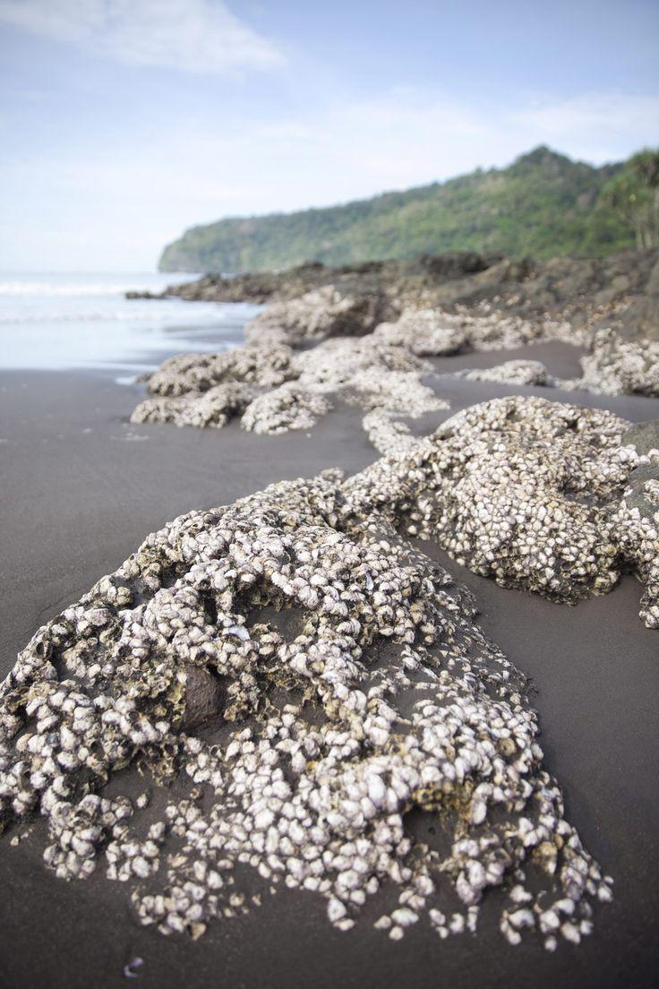 At Pantai Grajagan, Banyuwangi, East Java, Indonesia.