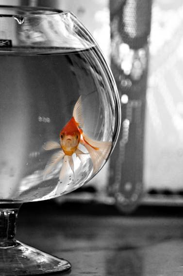 What TO bring:  You can bring a fish in a small bowl