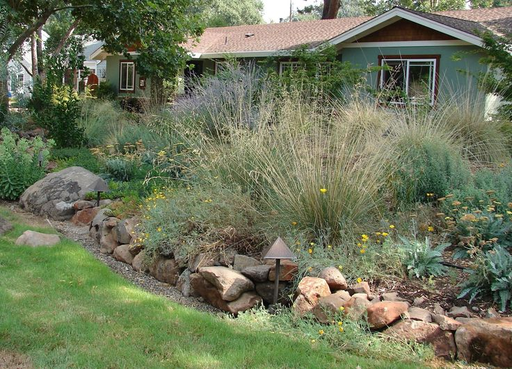 Top 25 best front yard hedges ideas on pinterest front for Natural landscaping ideas front yard