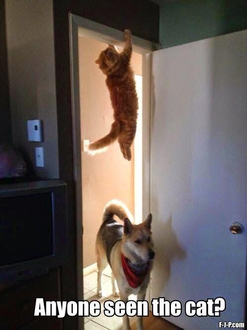 Funny Dog Chasing Cat Hiding Meme