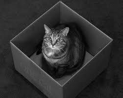 The Cat of E.S.