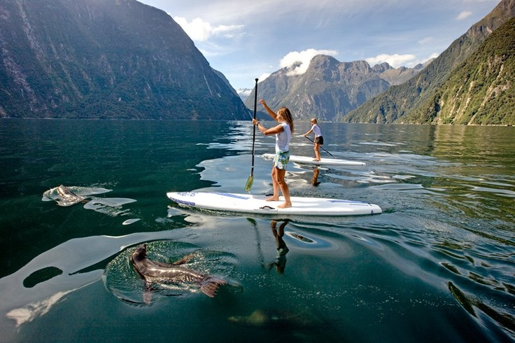 New Zealand SUP with seals!
