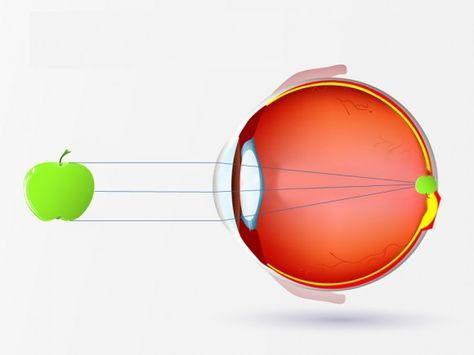 Das Auge ist das wichtigste Sinnesorgan des Menschen – nur mithilfe des Auges sind wir in der Lage, Bilder zu erkennen. Genauer gesagt nimmt das