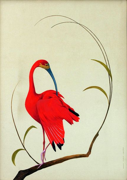 scarlet ibis - bruno ertz (1873 - 1956)