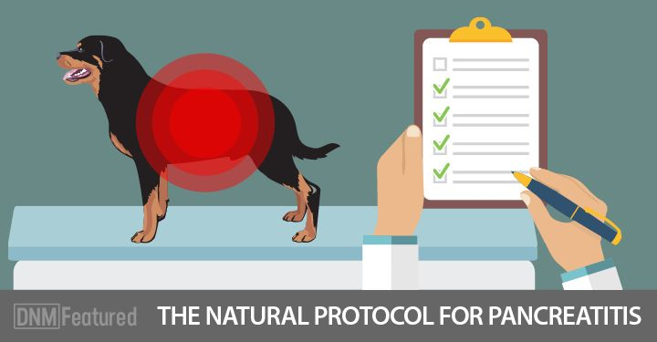 How To Help A Dog With Pancreatitis, Naturally!