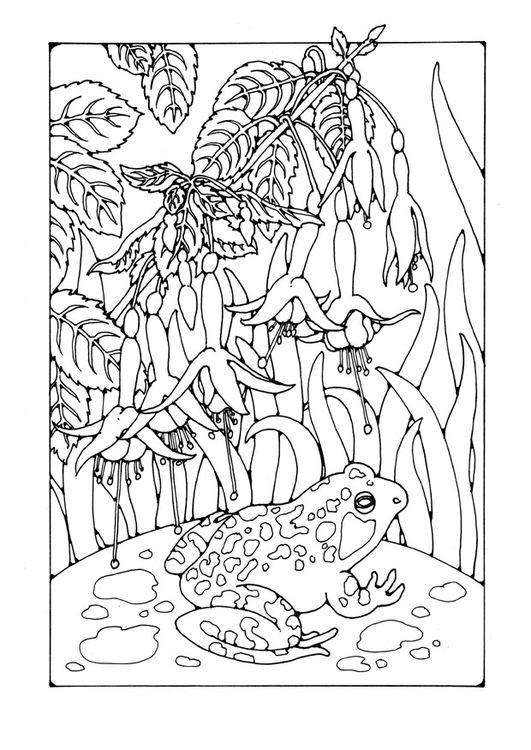 kleurplaat kikker fuchsia coloring page fuchsia with frog