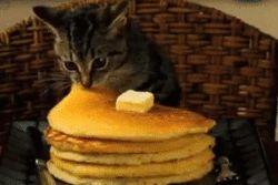 Kitty Pancake Theft