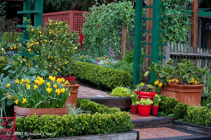1000 images about citrus landscape on pinterest trees for Plants around trees landscaping