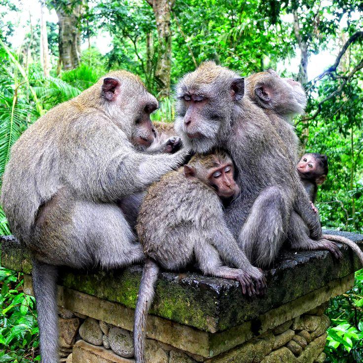 Friends from Ubud