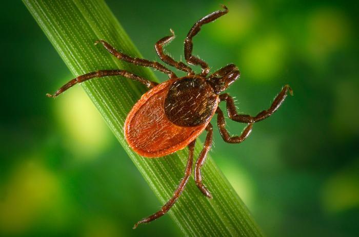 Learn more about Lyme Disease & Lyme Disease Treatment: http://sponauglewellness.com/wellness-programs/lyme-disease/
