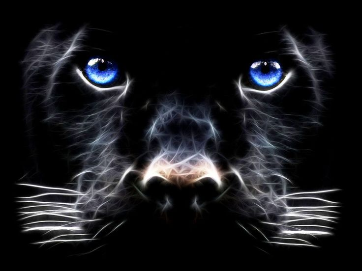 Best 20 moving screensavers ideas on pinterest dark - Moving animal wallpapers ...