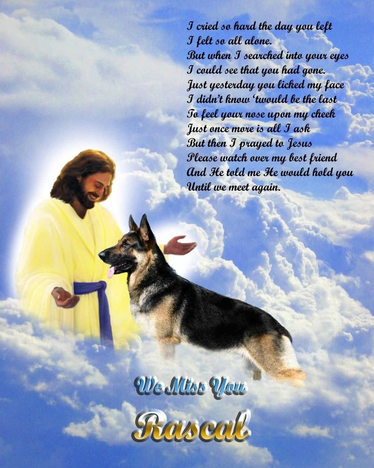 The German Shepherd | German shepherd dogs, Pet ...